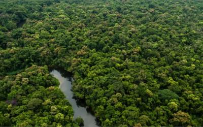 ¿Qué dicen las constituciones sudamericanas respecto al medioambiente?
