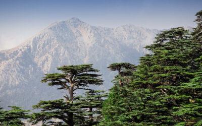 Estados cumplieron solo siete de los criterios para conservar la biodiversidad global