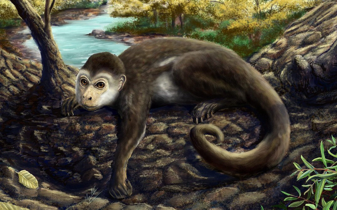 El primate descubierto en Chile que cambió la comprensión de la evolución del cerebro de los monos