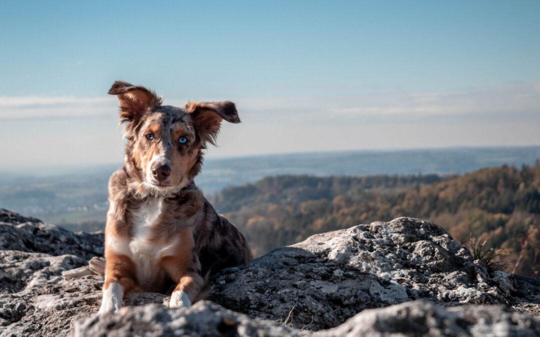 ¿Es correcto llevar a mi perro a la naturaleza?