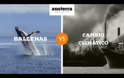 Ballenas V/S Cambio Climático