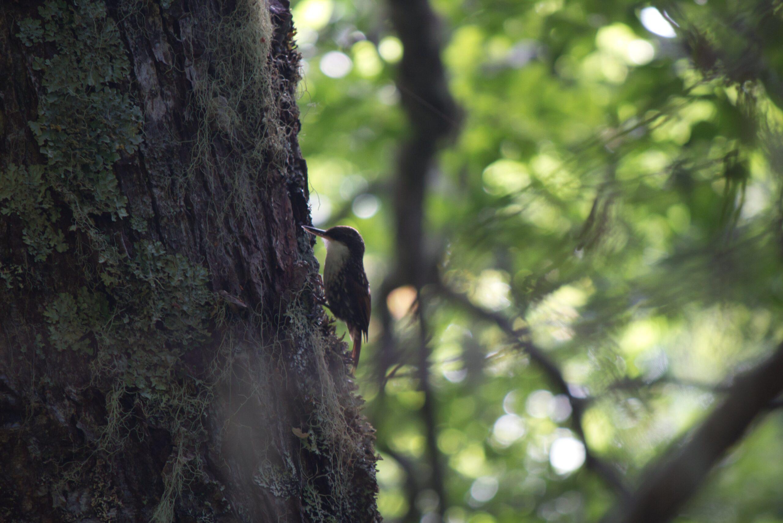 ¿Qué es la terapia de bosque Shinrin-Yoku? y cómo la naturaleza puede ayudarnos en tiempos de crisis