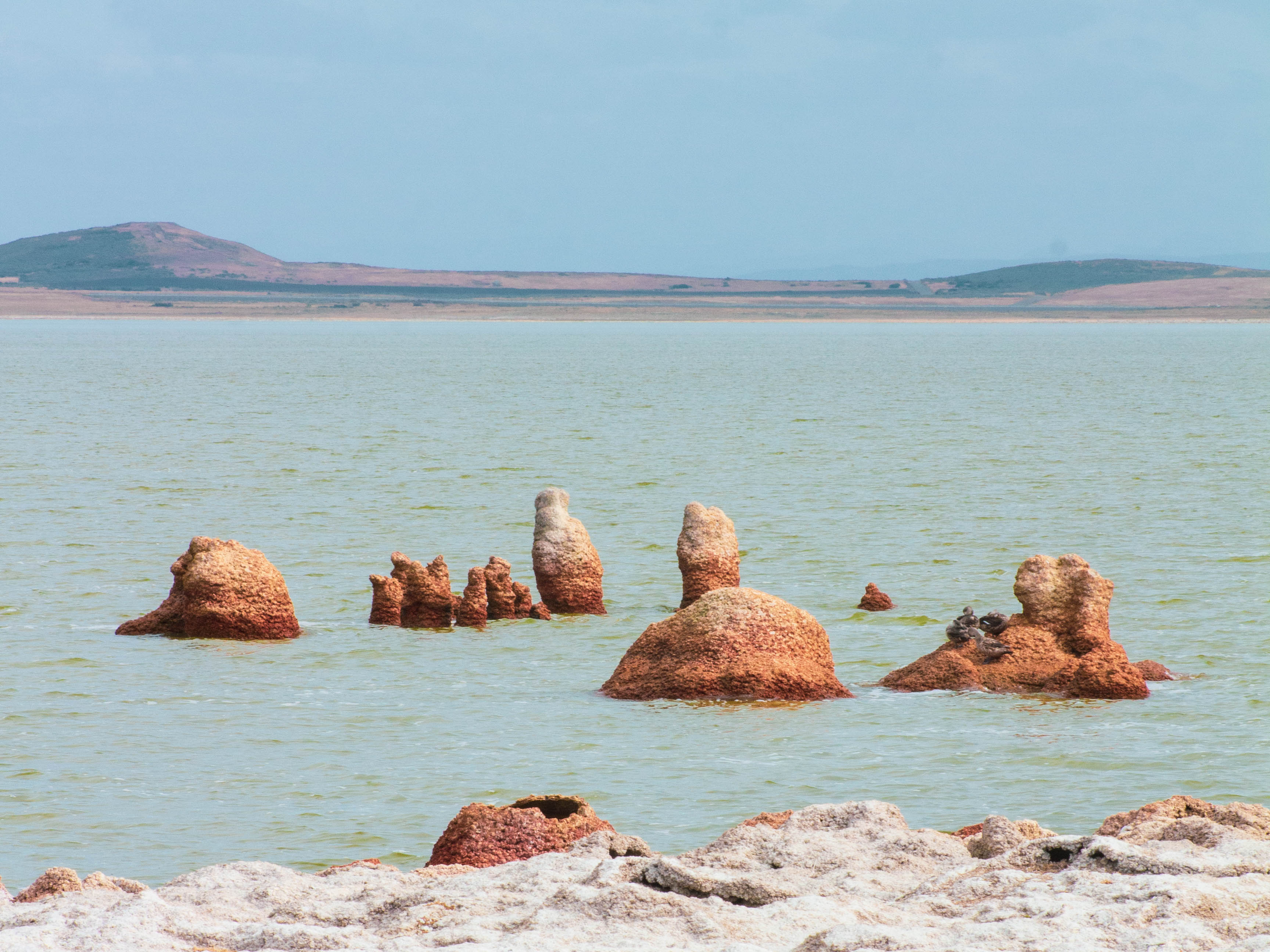 Estromatolitos; la forma de vida más antigua del planeta que aún vive en Chile