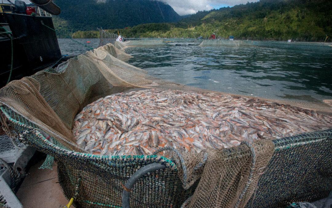 Más de 60 organizaciones solicitan la creación de una ley que termine con las concesiones acuícolas en áreas protegidas